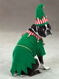 A photo of a dog in a green elf custome