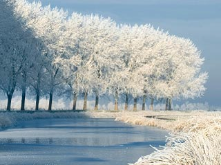 A photo of frost on the trees on a bright sunny Autumn morning