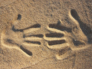 A photo of two hand prints in the sand