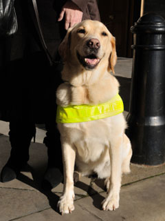 A photo of a seeing eye dog