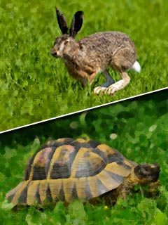 A photo of a tortoise and a hare