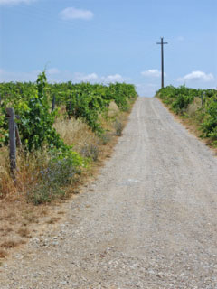 A photo of a vineyard and a road