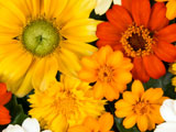 Photo of red, yellow, orange, and white autumn flowers