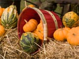 A photo of a basket filled with small pumpkins