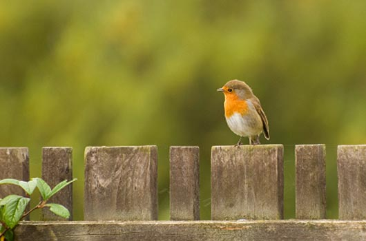 A photo of a bird sitting on a fence