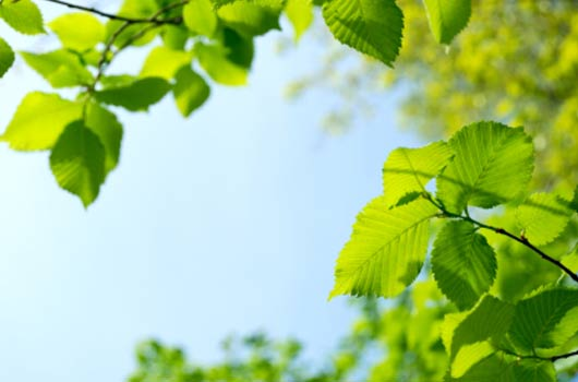 A photo of a green leaves against a blue sky