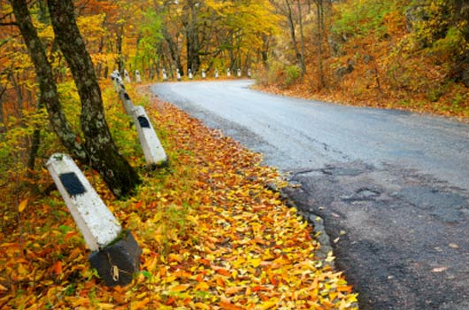 A photo of a curving road winding through Autumn colored trees
