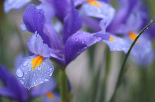 A photo of vivid colored purple flowers