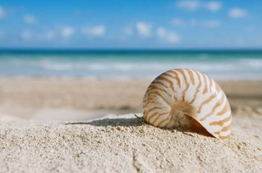 A photo of a sea shell on the beach