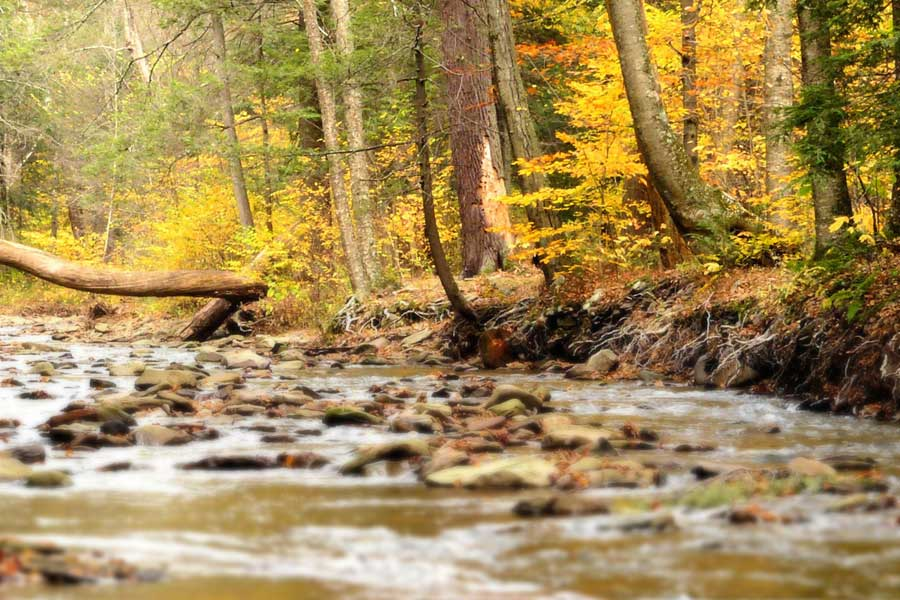 A photo of a rocky stream and colorful Autumn foliage
