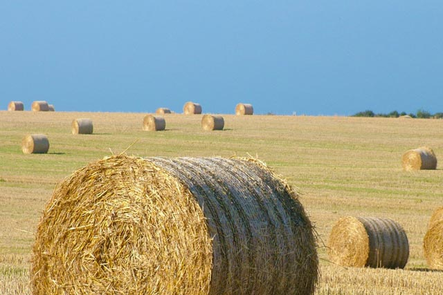 A photo of round hay bales.
