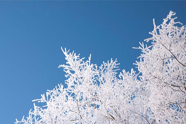 A photo of snow covered trees against a bright blue sky