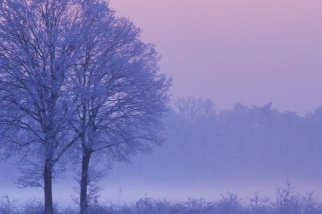 A photo a crisp, cool wintery scene.