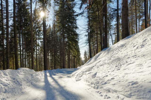 A photo of a snowy wooded scene.