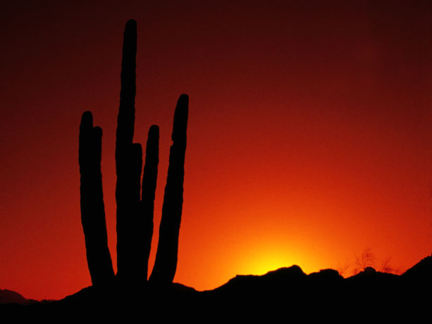 A photo of a desert sunrise