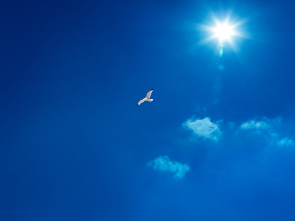 A photo of a dove against a vivid blue sky