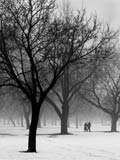 Photo of leaveless trees in a snow covered park