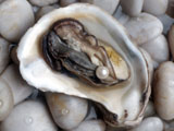 Photo of an oyster and a pearl