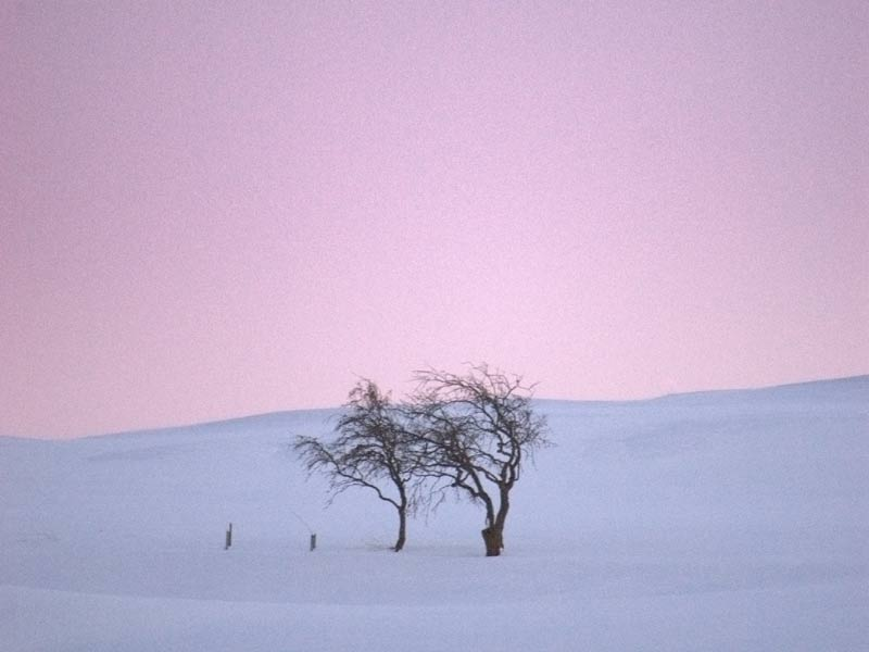 A photo of a snowy field against a pink sky