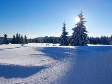 Photo of a snow covered meadow with the sun peeking out behind a snow covered pine tree
