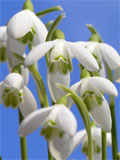 Photo of early spring flowers