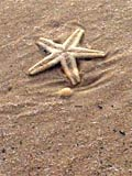 Photo of a starfish on the beach