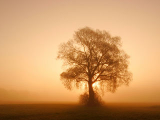 A photo of a tree without leaves against a misty sunrise backdrop