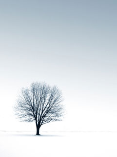 A photo of a single leafless tree in a snowy landscape