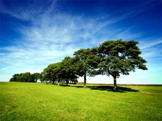 Photo of green trees in a green meadow against a vivid blue sky