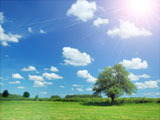 Photo of a landscape with a blue sky, green grass and a single lush tree