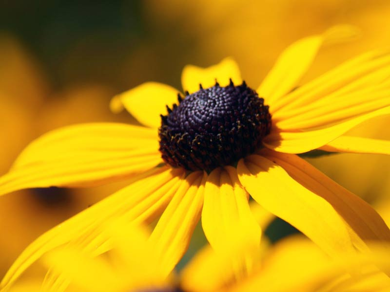 A photo of a yellow flower